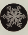 Wilson A. Bentley, Snowflake, c. 1905, Gelatin silver printing-out-paper print, 10.1 x 7.6 cm, MoMA, 393.2006.png