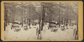 Winter view in Prospect Park, from Robert N. Dennis collection of stereoscopic views.png