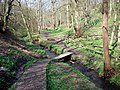 Wood Fall - geograph.org.uk - 386457.jpg