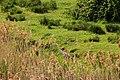 Woodbridge Suffolk (3519366924).jpg