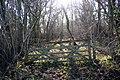 Woodland Gate - geograph.org.uk - 677282.jpg