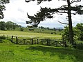 Woodland corner, Watchlaw - geograph.org.uk - 863541.jpg