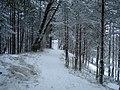 Woods in Bernati - panoramio.jpg