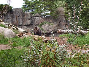 Woodland Park Zoo - Brown bear in Northern Trail area