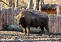 Wrocław - Zoo 08.JPG