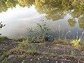 Xaverovský rybník I, břeh IV.jpg