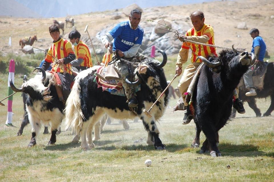 Yak polo match