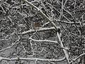 Zamecka zahrada 10 unora 2014 R.jpg