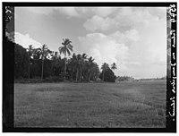 Zanzibar. Meadows, palms and clouds LOC matpc.00397.jpg