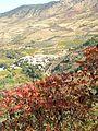Zumaque(Rhus coriaria) en otoño.jpg
