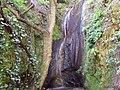 Árbol cerca de la cascada - panoramio.jpg