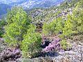 Φθινοπωρινό ρείκι - panoramio.jpg