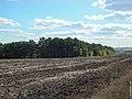 Бельцы, дубовая роща около дачного поселка Радуга - panoramio.jpg