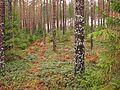 В лесу - panoramio (3).jpg