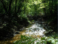 Ганівський ліс.png