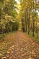 Гатчина. Аллея в Приоратском парке 1.jpg