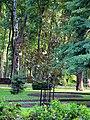 Гомель. Парк. Магония падуболистная. Фото 02.jpg