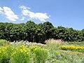 Дніпропетровський ботанічний сад 06.JPG