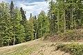 Красная Поляна. Лес на хребте Псехако.jpg