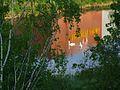 Лебеди в Лидском пиве - panoramio.jpg