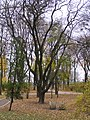 Маріїнський парк. Київ.JPG