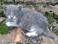Маче.jpg