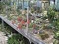 Никитский ботанический сад, Кактусы галлерея - panoramio.jpg
