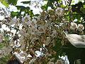Растения в Седово 245.JPG