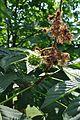 Растения в Седово 277.jpg