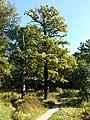 Указатель на лесной дороге - к храмам Бутовского полигона у Варшавского шоссе.jpg