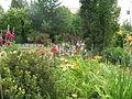 Цветы - panoramio.jpg