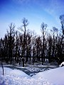 Шуме букве на Сави.jpg