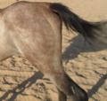 ساقا حصان 12.PNG