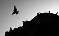 عکس ضد نور از پرنده-Silhouette of pigeons.jpg