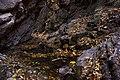 پاییزدر ایران-قاهان قم-Autumn in iran-qom 25.jpg