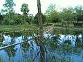 বাঁশের সাঁকো (Bamboo Bridge).jpg
