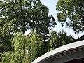 中國蘇州庭園33China Classical Gardens of Suzhou.jpg
