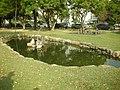 中興湖的小台灣池 Taiwan Pool - panoramio.jpg