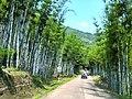 新丰司茅坪林场20150412 - panoramio (43).jpg