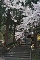 新長谷寺の桜 - panoramio.jpg