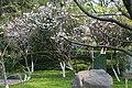 景山桃花园 - panoramio.jpg