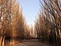 烏素圖公園 - panoramio.jpg