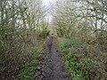 -2021-01-18 West along Weaver's Way footpath, East Ruston, Norfolk (2).jpg