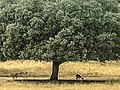 - panoramio - Carlos Ramón Bonilla… (4).jpg