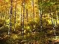 01-Herbstlichter.jpg