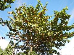 01423jfCapalangan Sulipan Apalit Pampanga Peters Trees Shrinesfvf 20.JPG