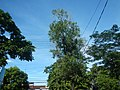 03129jfEspana Boulevard Landmarks Barangays Lacson Sampaloc Manilafvf 05.jpg