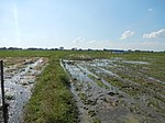 03306jfBirds Sanctuary Ducks Wetland Marshes Rice Fields Candaba Pampangafvf 01.JPG