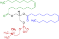 1-Oleoyl-2-almitoyl-phosphatidylcholine Structural Formulae V.1.png