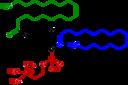 1-Oleoyl-2-almitoyl-phosphatidylcholine Structural Formulae V.1